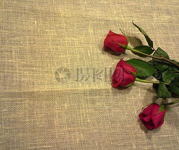情人节520礼物红色玫瑰特写图片