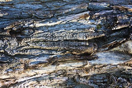 阳光下的树皮图片