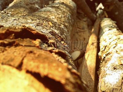 腐朽的树干和树皮图片