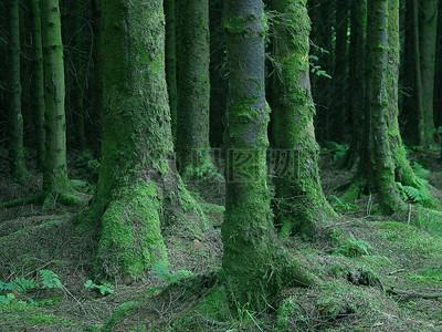 夜晚森林中的鹿图片_夜晚森林中的鹿素材_夜晚森林中