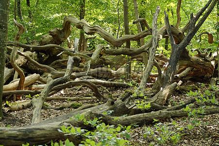 森林高清图片