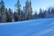 蓝天下的树林图片
