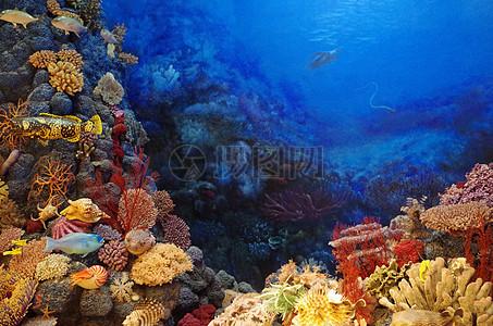 海底世界里的五彩缤纷图片