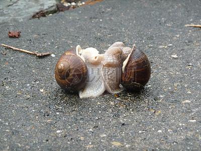 两只恩爱蜗牛图片