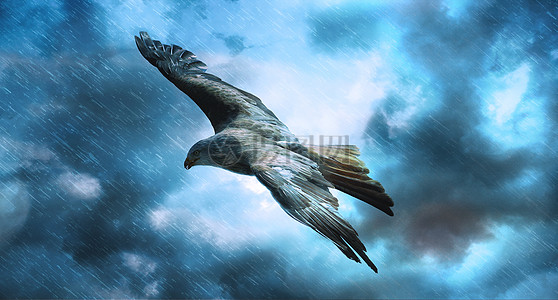 狂风暴雨下飞行的鸟图片