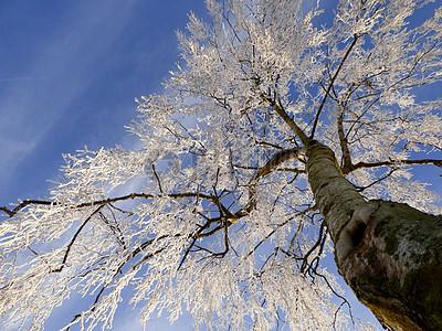 冬天大树银装素裹图片