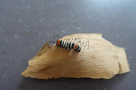 树皮上的毛虫图片