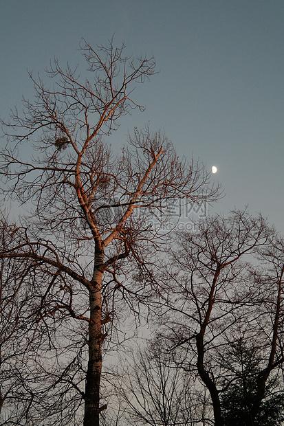 月光下的银白杨图片素材_免费下载_jpg图片格式_高清