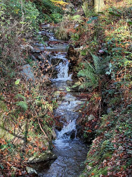 图林根森林图片