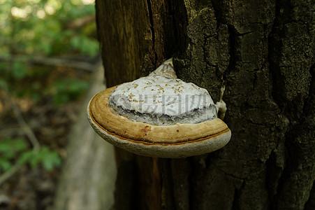 奇幻蘑菇森林场景图片_奇幻蘑菇森林场景素材_奇幻_摄