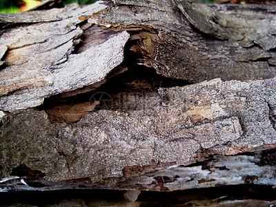 腐朽的老树皮图片