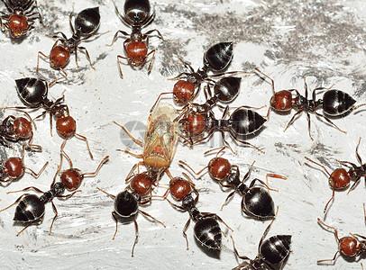 面粉上的小蚂蚁图片