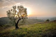 树在阳光照绕下成长图片