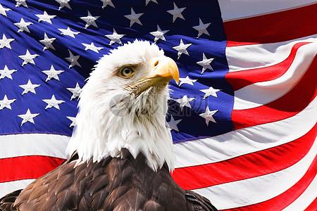 美国国旗下的鹰图片