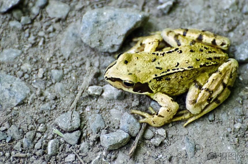 唯美图片 自然风景 青蛙jpg