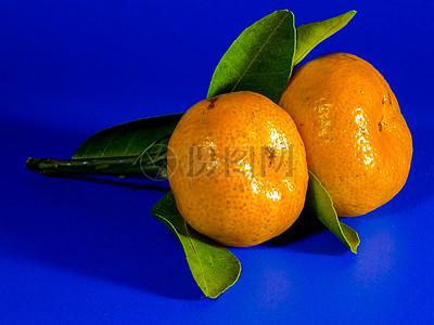 蓝色背景下柑橘写生图片