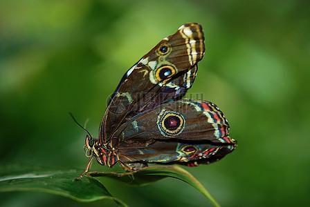 一只色彩斑斓的蝴蝶图片