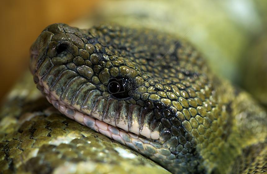 盘旋的大蟒蛇