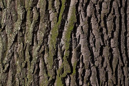 皱巴巴的老树皮图片