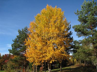 郊外小树林美景图片