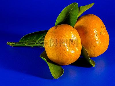 柑橘类水果写生图片