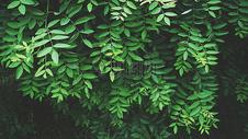 夏天茂盛高清绿色植物图片