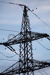 站在电力杆上的鸟图片