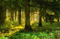 清晨阳光照进树林图片