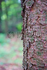 树皮花纹特写图片
