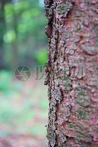 树干上的树皮图片