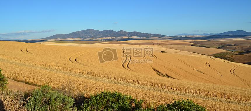 秋天麦田的风景图片