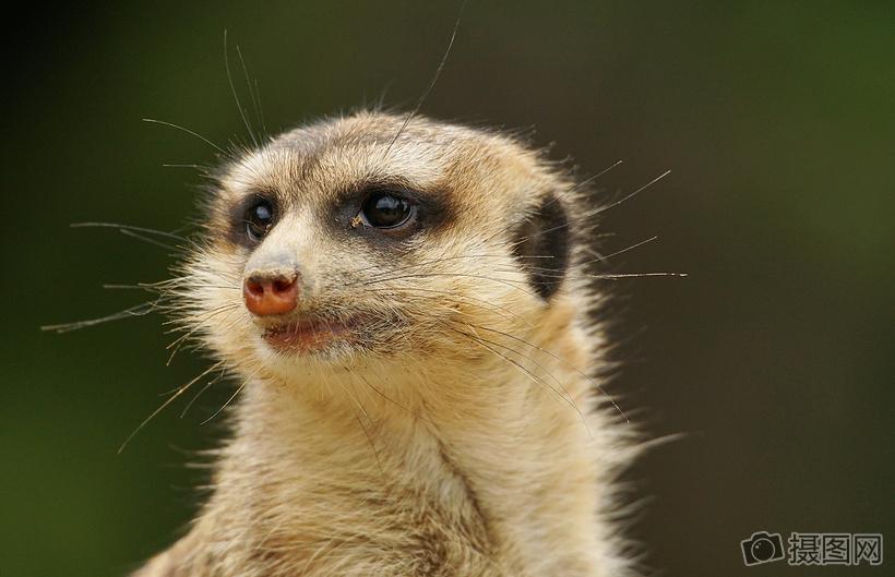 呆萌可爱的小动物图片