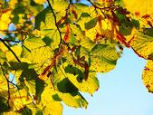蓝天下的树叶图片