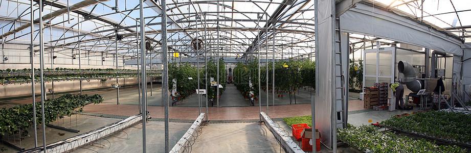 蔬菜种植大棚图片