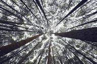 高山上的大树图片