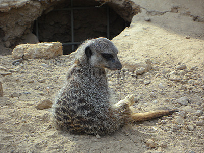 沙地上塌陷的洞子前的小动物图片