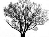 干枯树枝的剪影图片