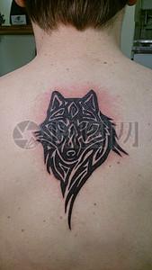 后背的狼纹身图片