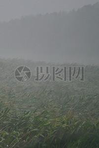 暴风雨中的玉米地图片
