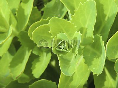绿色的野生植物图片