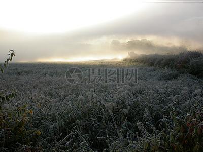 布满霜花的植被图片