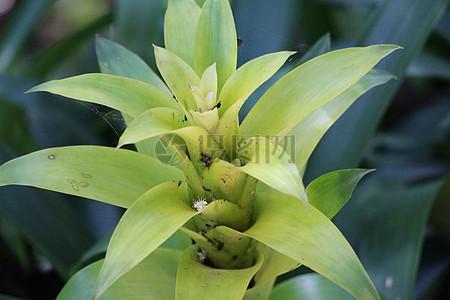 植物高清图片