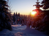 冬日阳光下的森林图片