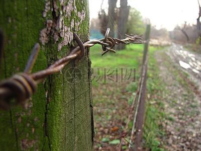 树木中的一根防护栏图片
