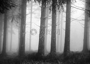 阴暗潮湿的大森林图片
