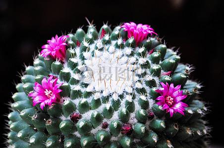 肉质鲜花植物图片