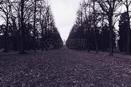空旷的道路两边图片