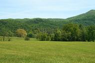 绿油油的大草地和树林图片