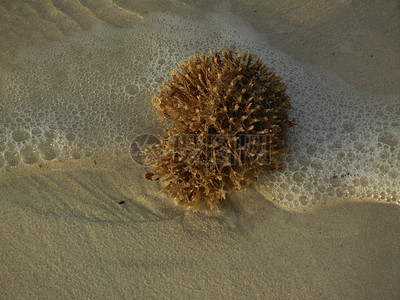 海绵动物水沟系统图
