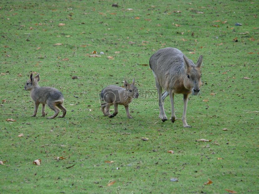 草地上的小动物